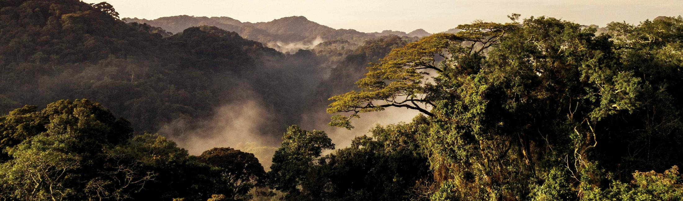 Morning view on Gishwati Mukura-National Park (Rwanda)