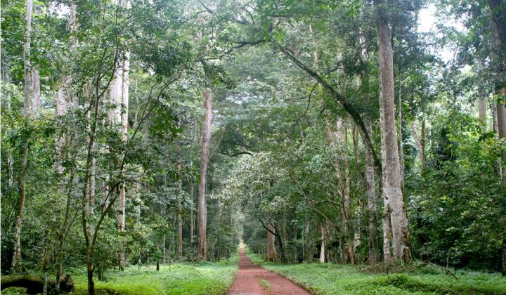 Budongo Forest Reserve is part of Murchison Falls National Park (Uganda)
