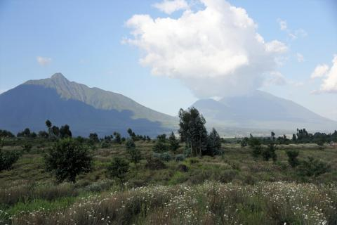 View on Virunga Chain of volcanoes (Gahinga Gorilla NP Uganda)