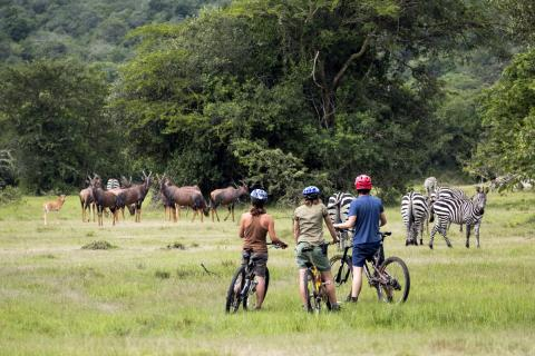 Game Drive by Bike (Lake Mburo Uganda)